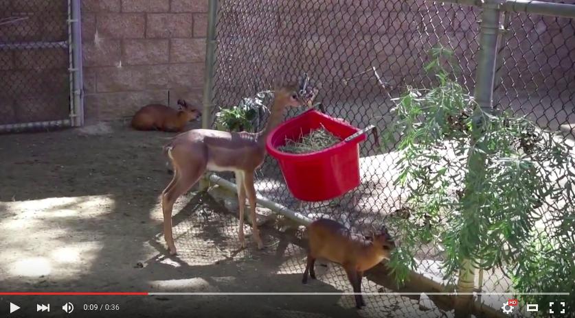 ロサンゼルス動物園の癒しどうぶつ