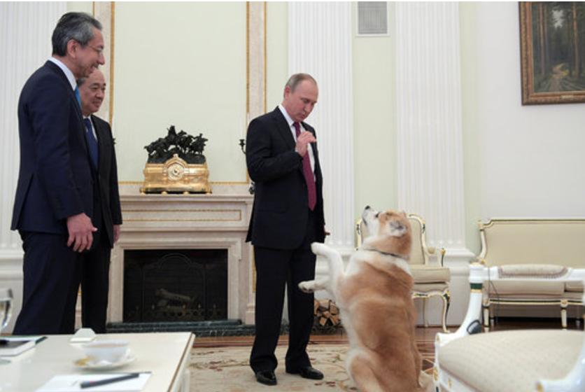 """「ノー・ナンセンス」な番犬""""ゆめ""""、正直すぎるCNN記者が書いた、正直すぎる英語とは?"""